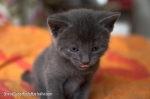 kitten with tongue out