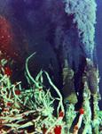 thumb Microworld undersea